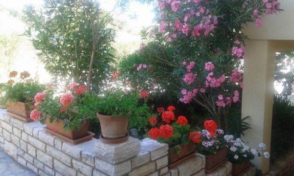 Blumen Ferienwohnungen in Kožino